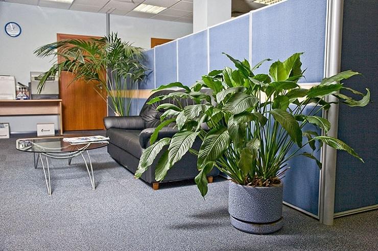 lợi ích của cây xanh trong văn phòng làm việc