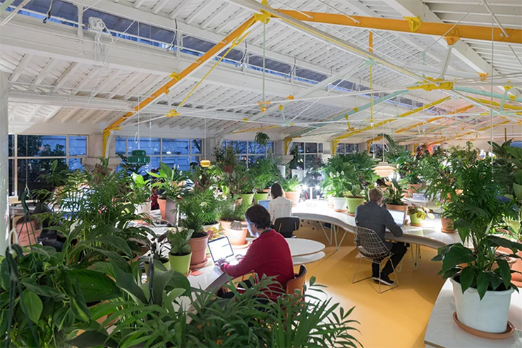 thiết kế khu vườn xanh trong văn phòng