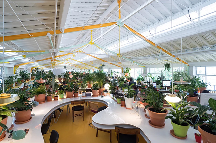 thiết kế văn phòng ngập tràn cây xanh
