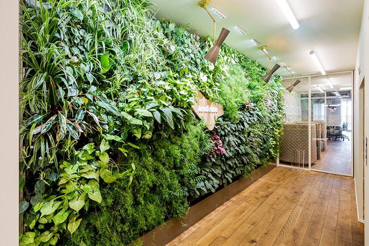thiết kế bức tường xanh trong văn phòng