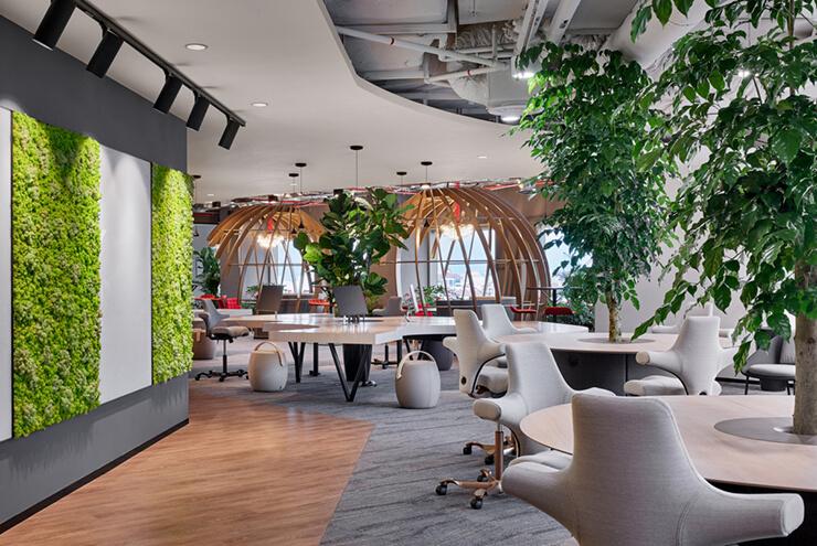 trang trí cây xanh lớn trong văn phòng